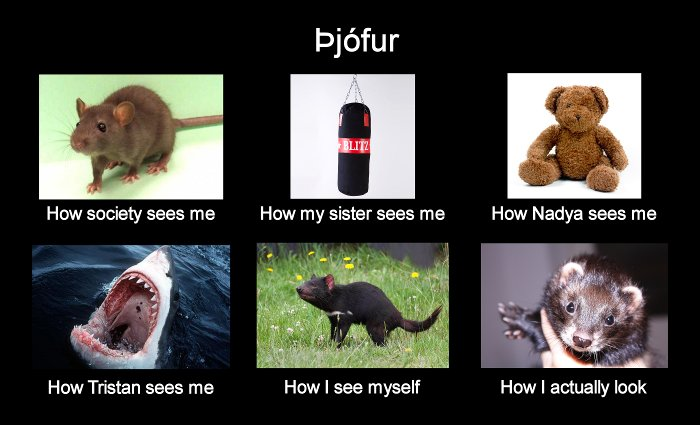 [An image titled 'Þjófur' with sixsubimages, each with captions: 1. A photo of a rat, captioned 'Howsociety sees me'.  2. A photo of a punching bag, captioned 'How mysister sees me'.  3. A photo of a teddy bear, captioned 'How Nadyasees me'.  4. A photo of a great white shark baring its teeth,captioned 'How Tristan sees me'.  5. A photo of a regal-lookingTasmanian devil, captioned 'How I see myself'.  6. A photo of Þjófurthe ferret, captioned 'How I actuall look'.]
